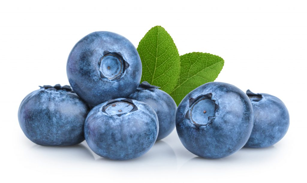 Blueberries rich in antioxidants and highly nutritious